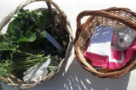 Καλάθια, μαχαίρια, σημειώσεις... χόρτα και βότανα.